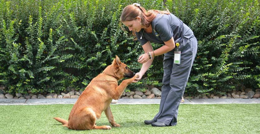 Aprendizagem canina: condicionamento operante