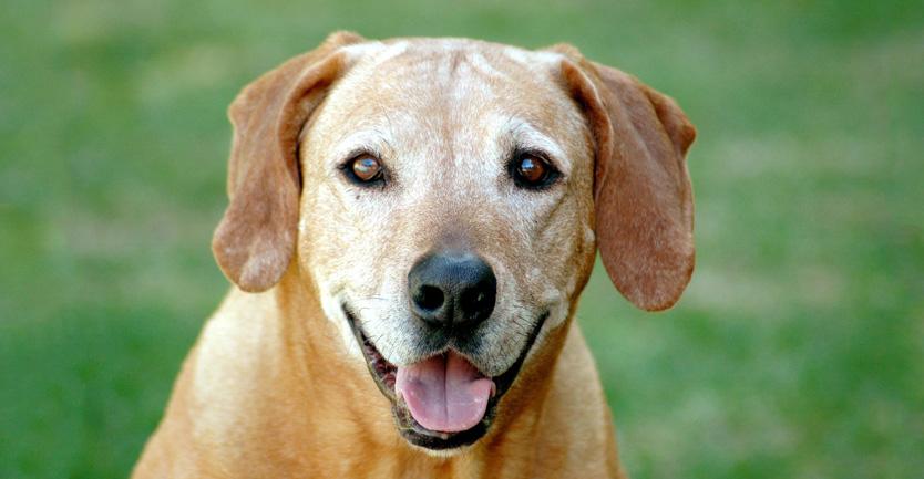 Cão sénior, um cão com vida!