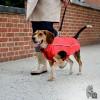 Dogs Gone Smart NanoBreaker RainCoats Capa